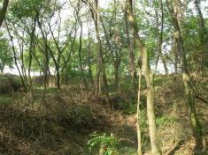 Lesopark skala Polešovice